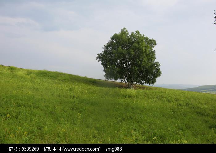 乌兰布统草原山坡小树图片