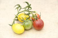 西红柿静物照