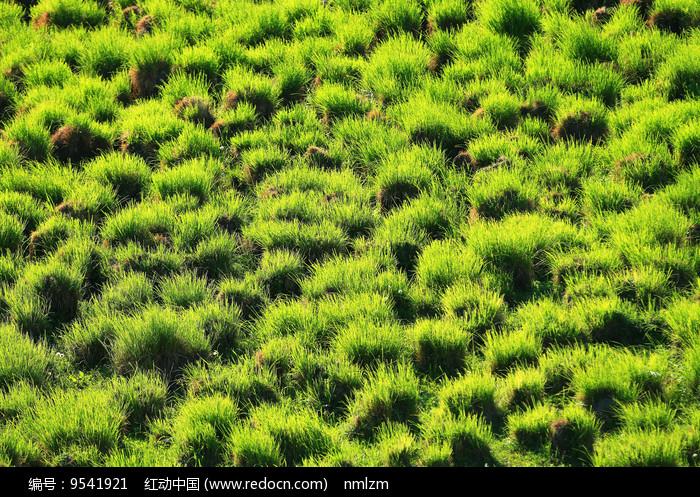 草原湿地草甸塔头图片