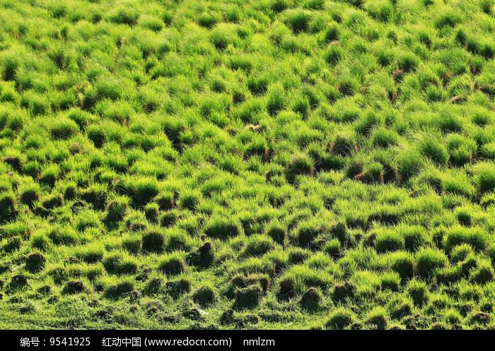 草原湿地草甸塔头景观图片