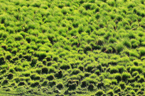 草原湿地草甸塔头景观