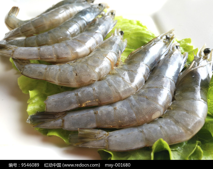 基围虾素材图片