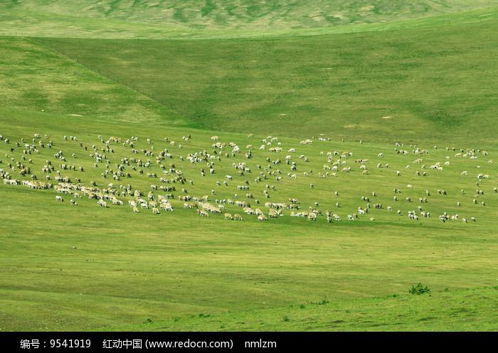 辽阔牧场羊群 图片