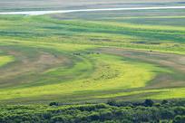 绿色牧场 吃草的牛群