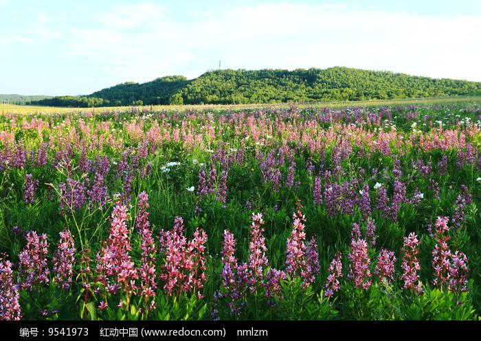 牧场草甸开满了野花图片
