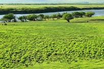 牧场河流湿地草甸