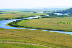 牧场河湾吃草的马群