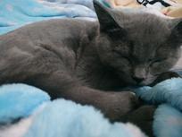 打瞌睡的猫