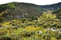 金秋时节的普达措山林