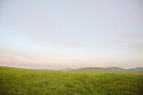 草原百花开的山坡