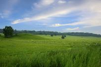 草原蓝天树树丛美景