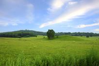 草原树林美景