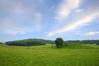 蓝天下的草原树林