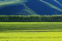 绿色农田黑土地耕地景观