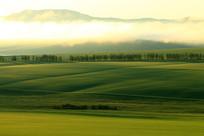 农田树林晨雾缥缈