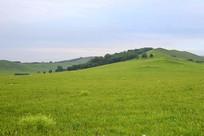 起伏的草原山坡