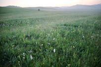 日落时的草原青草