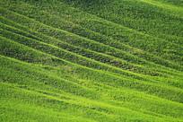 山坡绿色的牧场