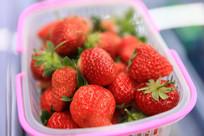 早上摘的新鲜草莓