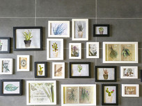 植物装饰墙