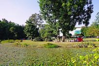 华南植物园风光