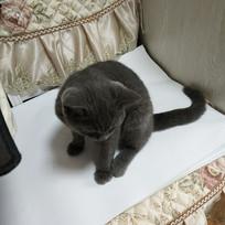 低头的小猫