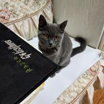 好奇的小猫