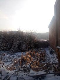 冬天地里的农作物