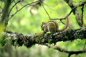 可爱的松鼠
