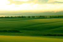 晨雾缥缈的田野