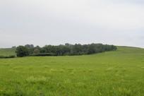 草原草甸的小树林