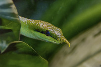 探出头来的蛇