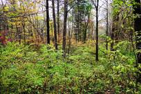 吉林延边秋季树林