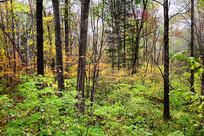 延边八家子秋季树林