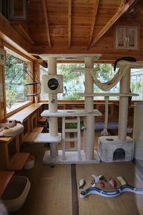 宠物猫咪的家