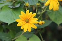 金盏花花朵花丛