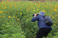 摄影师在金盏花花海里
