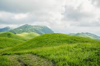 空旷的高山草甸