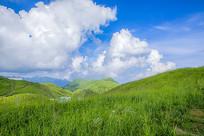 晴空万里的草场