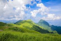 青青美美的草场