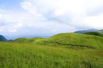 山顶的牧场