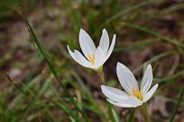 特写的花卉