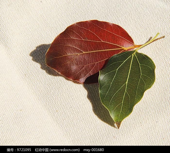 红绿叶图片