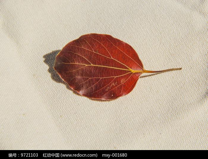 红色叶片图片