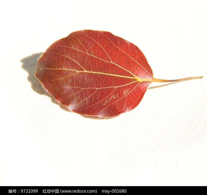 静物红叶片图片