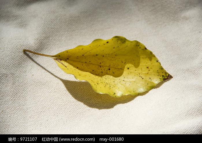 静物黄叶图片