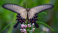 蝴蝶背部特写