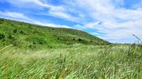 绿色的草地和山丘