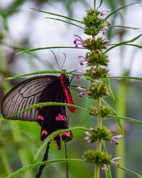 野花上的蝴蝶