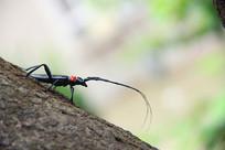 爬行中的昆虫